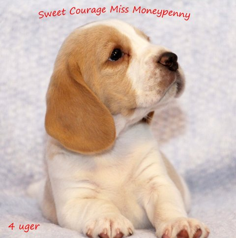 Miss Moneypenny - 4 uger
