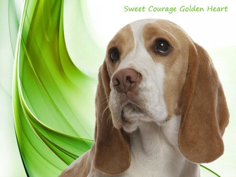 Sweet Courage Golden Heart (Amber)