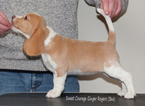 SC Ginger Rogers (Bea)